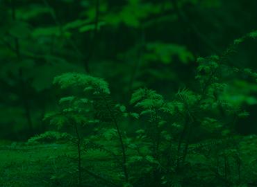 Áreas Verdes Urbanas e Rurais